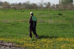 Running through a dandelion glade